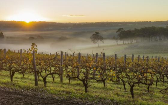 Margaret River Wine Region, Western Australia