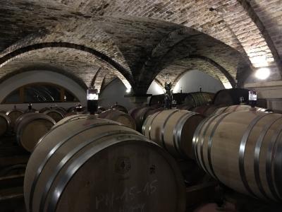 Johanneshof Reinisch cellar - spot the cat!