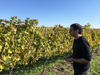 Georg Schneider in the vineyard