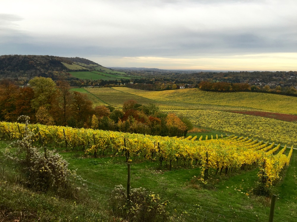 Denbies Vineyard, Dorking, Surrey, UK, October 2015