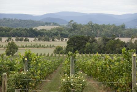 pyrenees victoria wine region