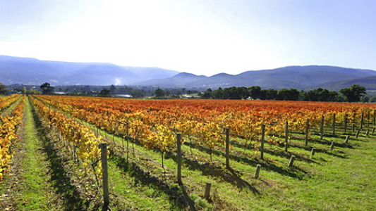 yarra valley victoria vineyard