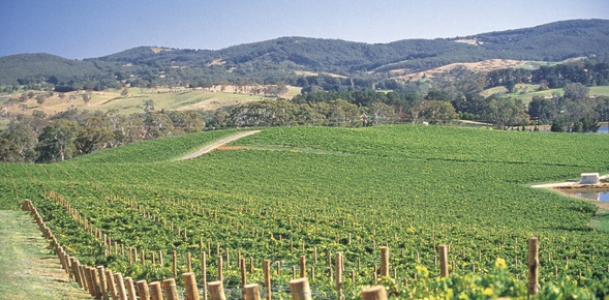 adelaide hills vine region, South australia