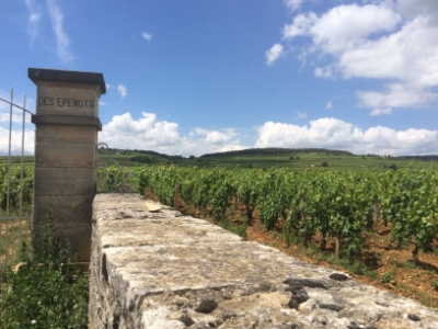 Des epenots vineyard cote de beaune burgundy