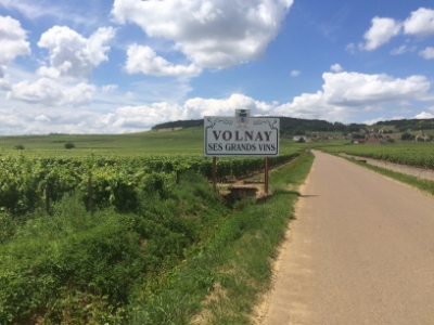 volnay vineyard burgundy
