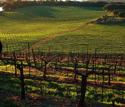Chappellet winey, St. Helena, Napa valley