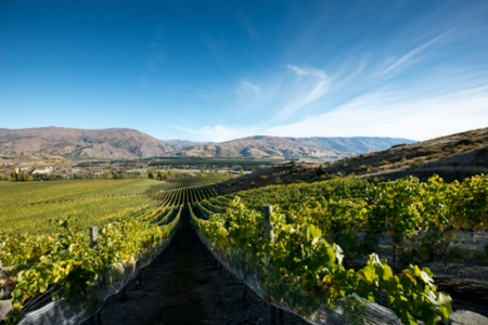 Central Otago New Zealand vineyard