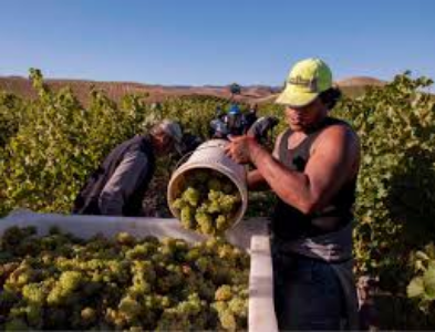 Greywacke winery, NZ