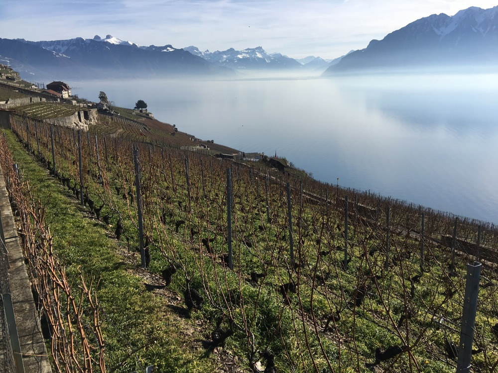 Wonderful January day on Route Cantonale Vevey-Chexbres, Switzerland