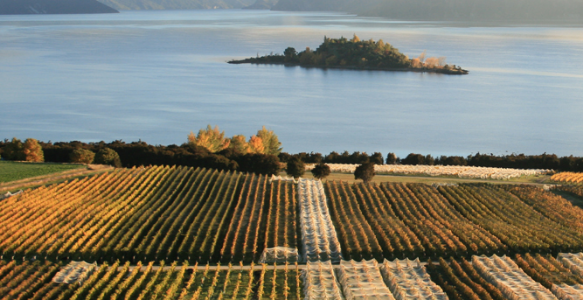 Rippon Vineyard, Lake Wanaka, New Zealand