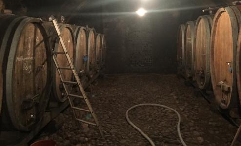 Weingut zeireisen cellar.JPG