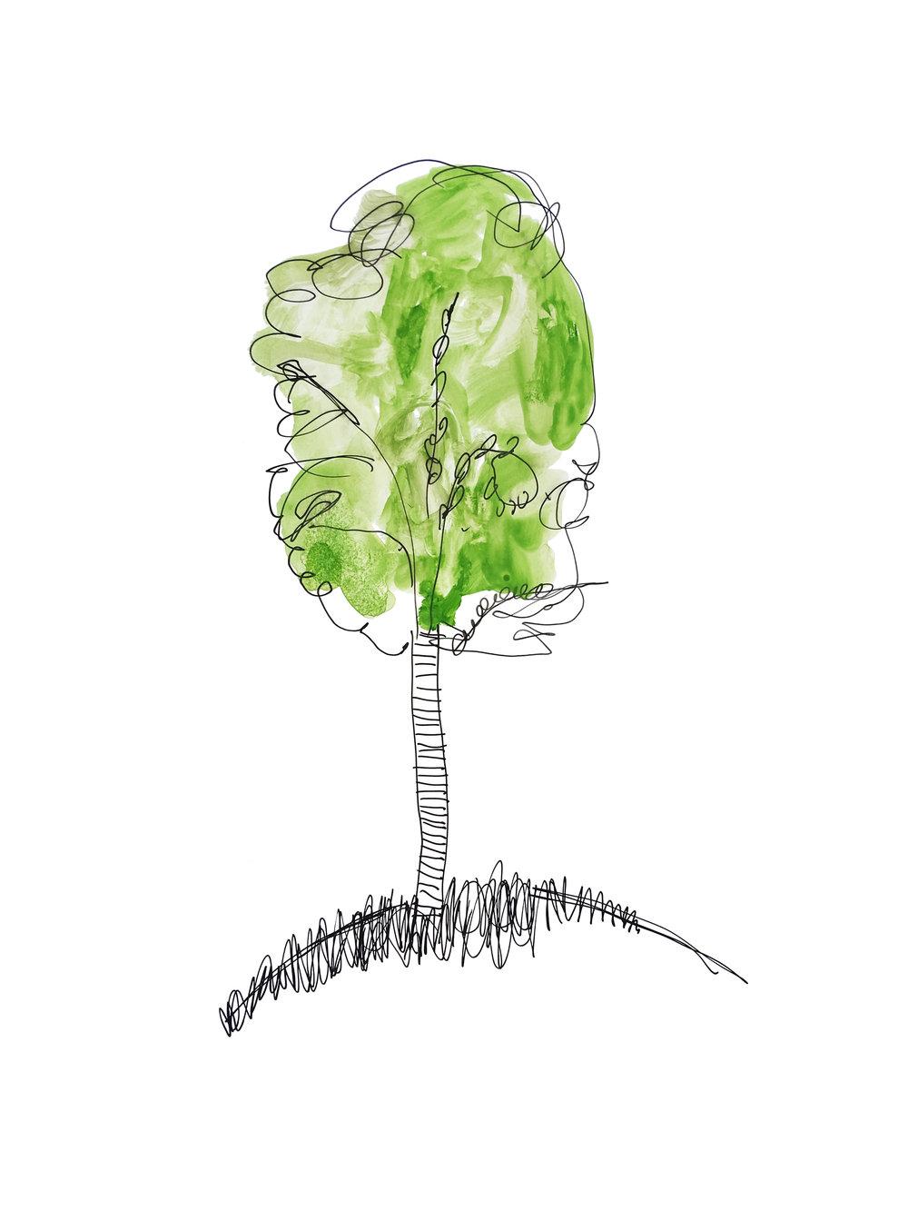 Thebirchtreeisgrowingfast.jpg