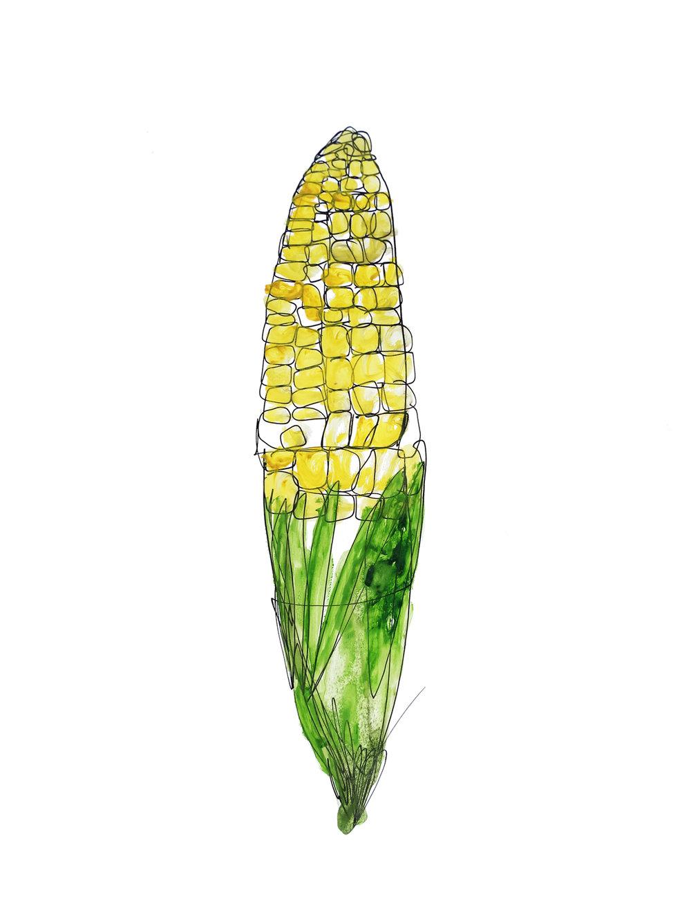Thecornisreadyforharvest.jpg