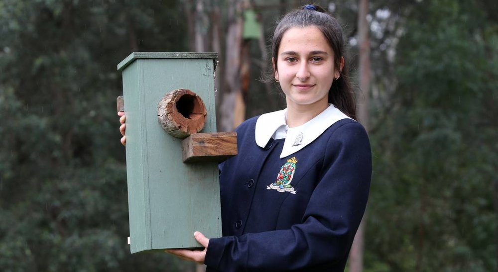 "Rare find: ""It makes me happy and proud that we're helping sugar gliders live,"" Redeemer Baptist School Year 10 student Evette Khaziran said. Picture: Geoff Jones"