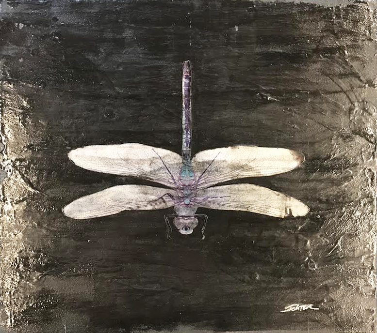Grey Dragonfly (17-24499)