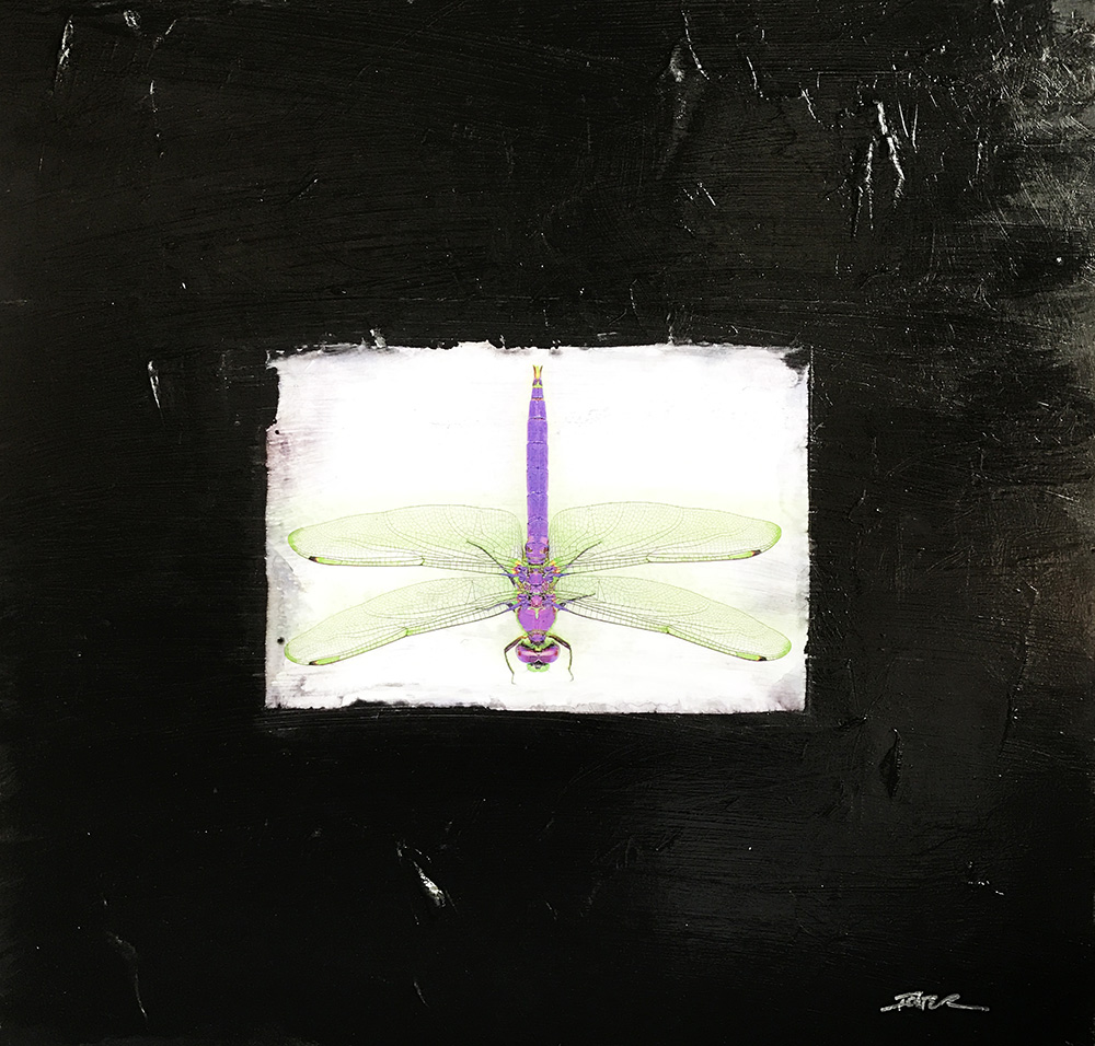 17-24566 Ichter Purple Dragonfly 20x20 mixed media.JPG