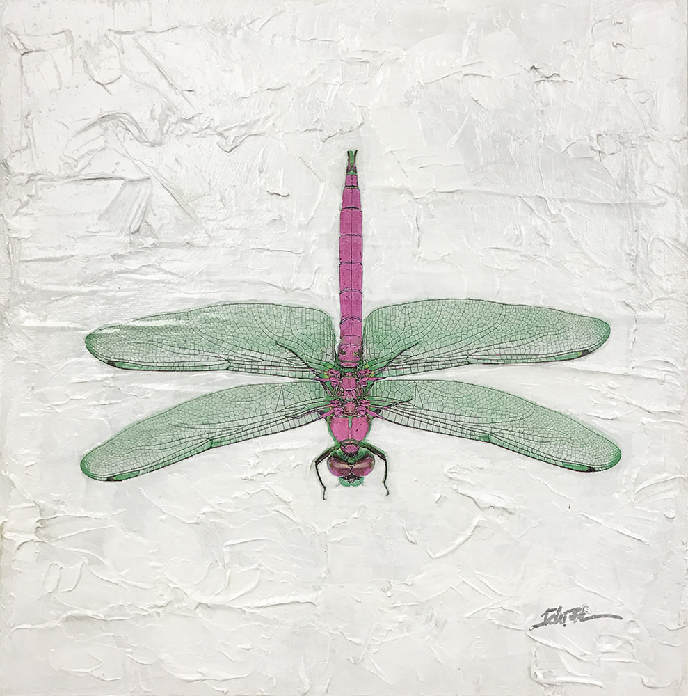Dragonfly (17-24693)
