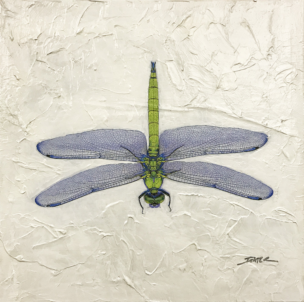 Dragonfly (17-24696)