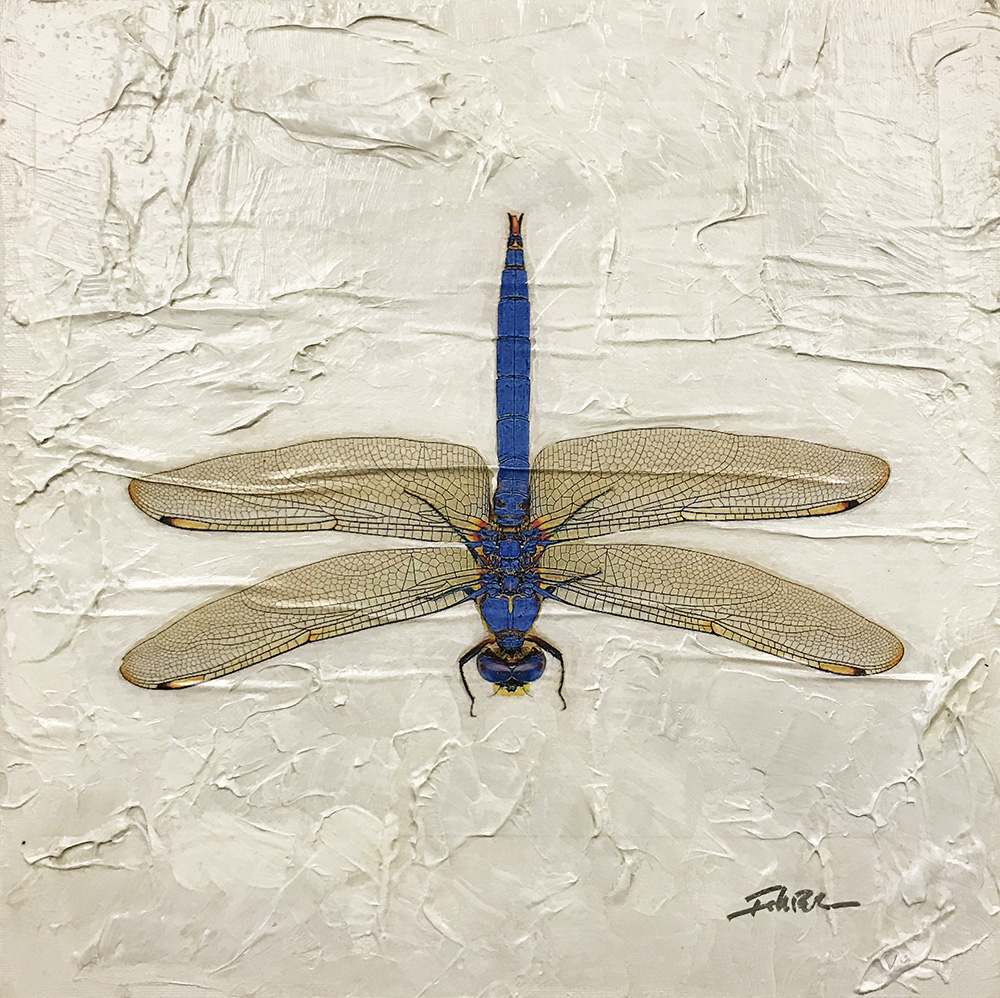 Dragonfly (17-24695)