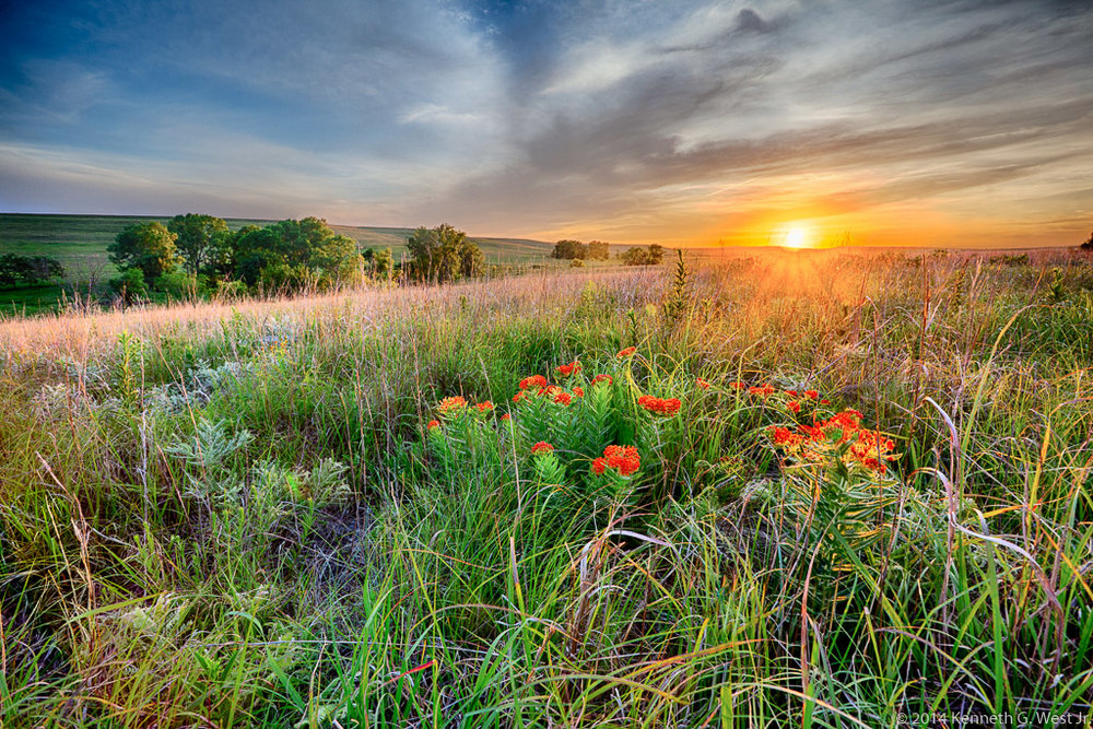 "West ""Blooming Prairie"""
