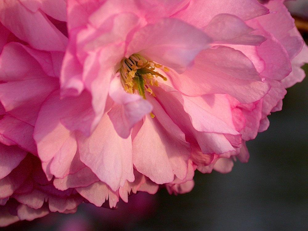 blossomcloseup.jpg