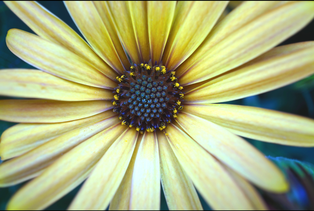 yellow flower.jpg.png