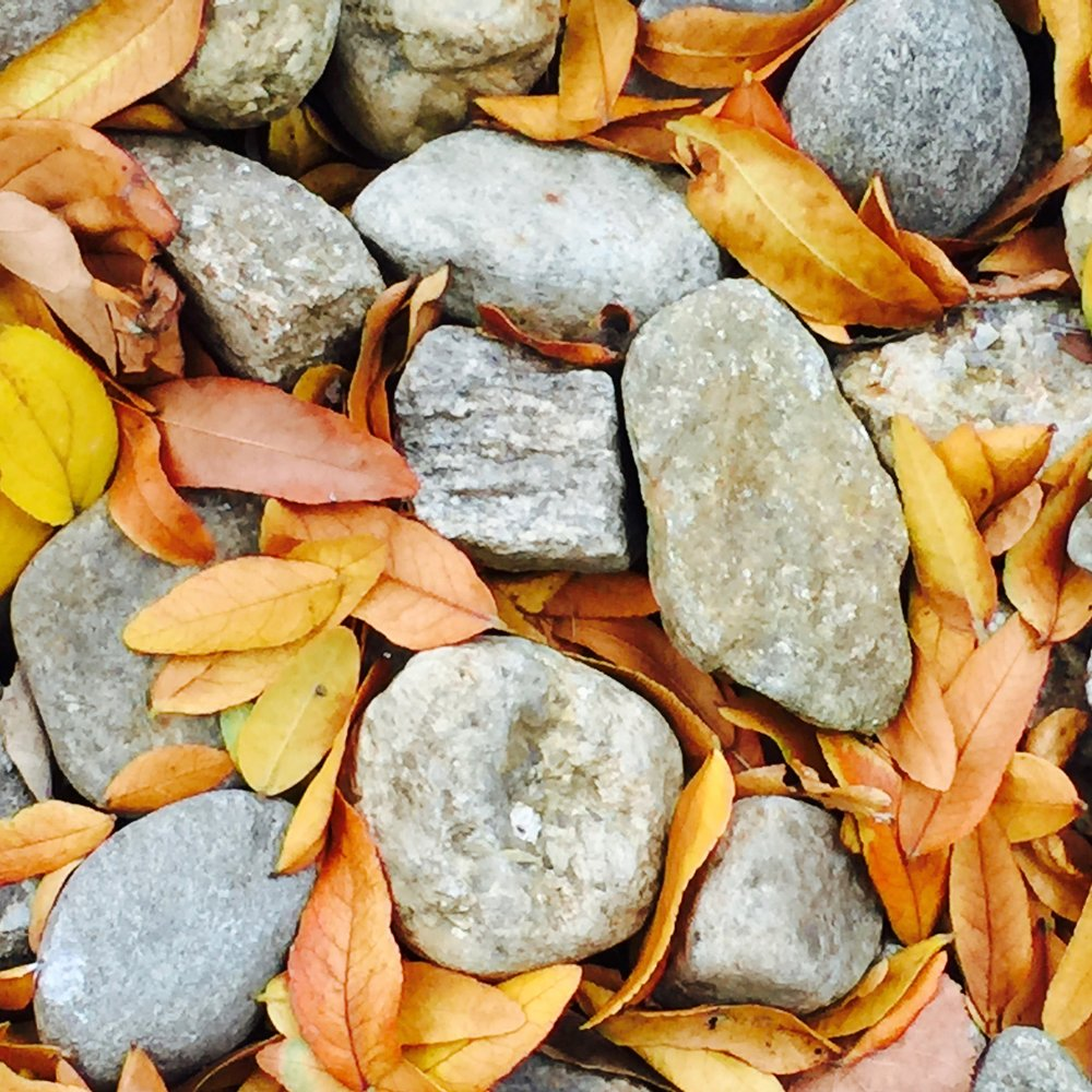 stones and leaves suzanne merritt.jpg