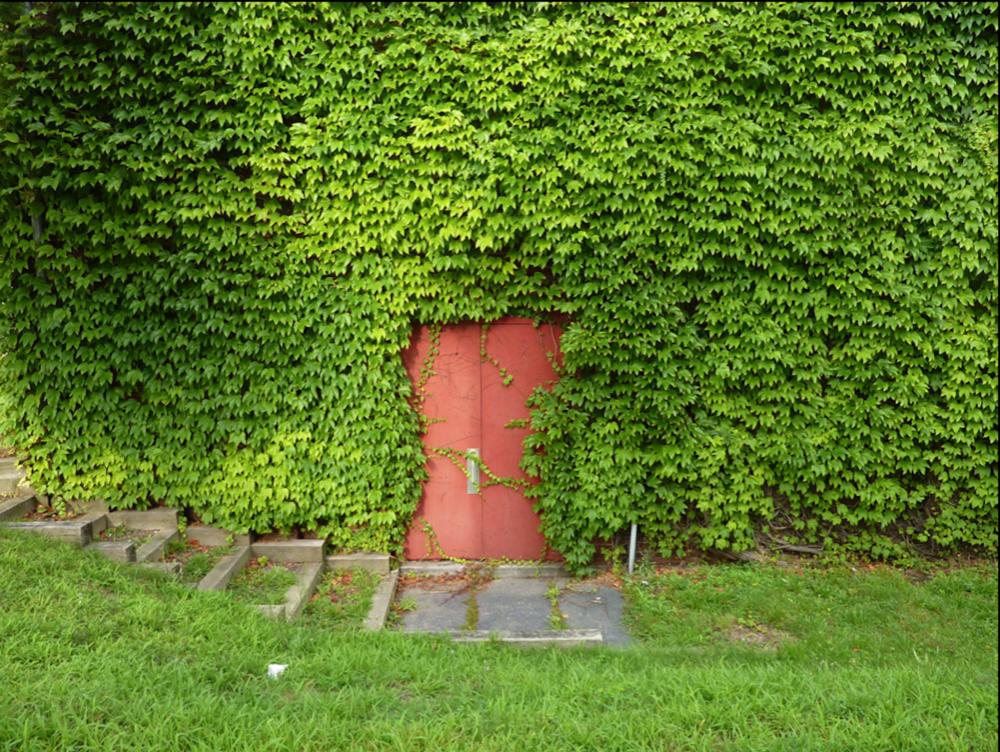 reddoor_vines.jpg