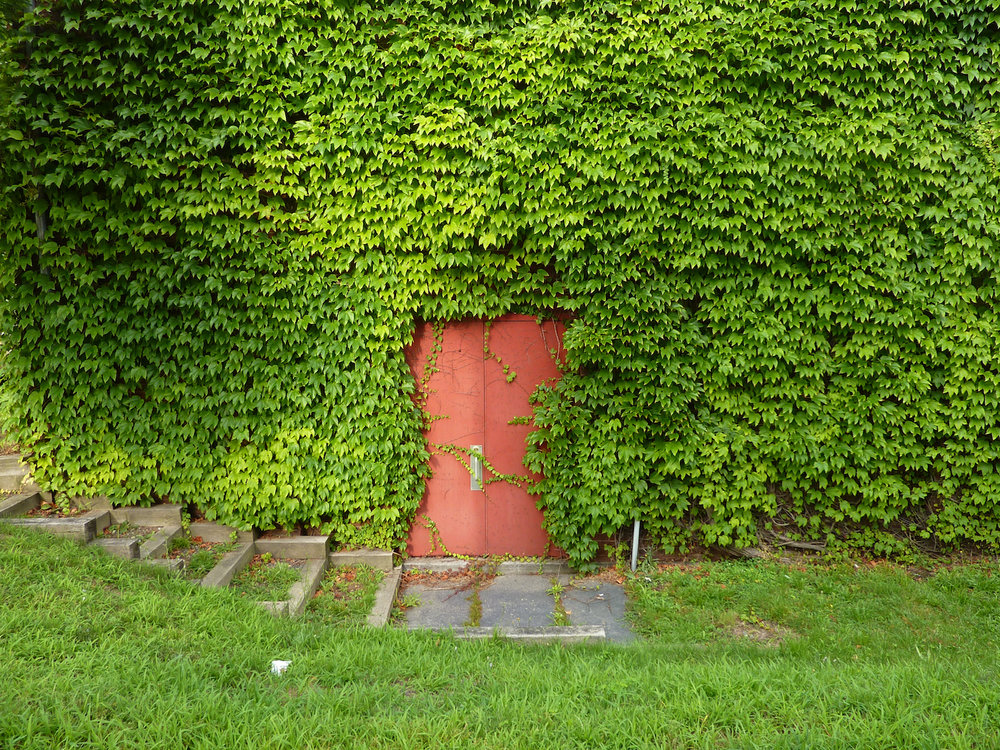 red door suzanne merritt copy.jpg
