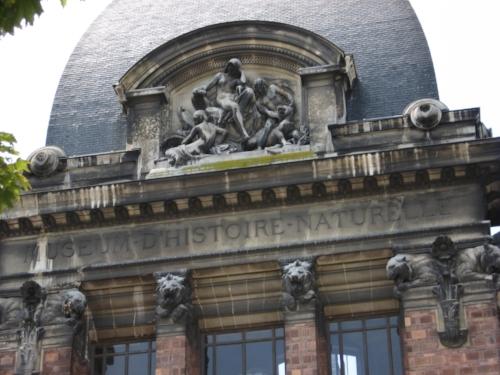 Museum d'Histoire Naturelle, Paris, 2009 (S J Kessler)