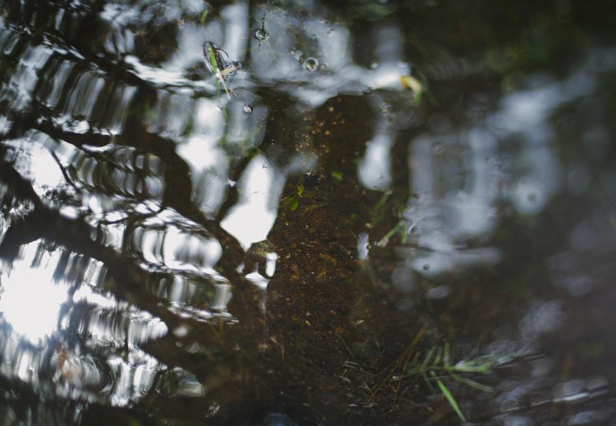 Kim_Turner_Smith_Forest_Dripping.jpg