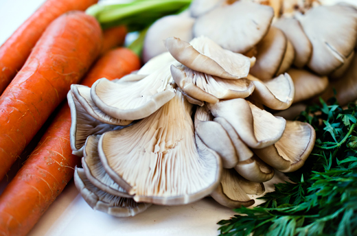 Oyster Mushrooms: Putting the fun in fungi — Grid Magazine