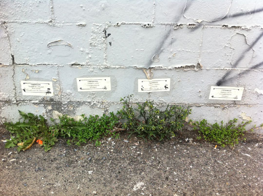 weeds2-web.jpg