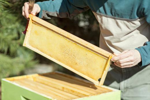 beekeeper_slideshow3.jpg