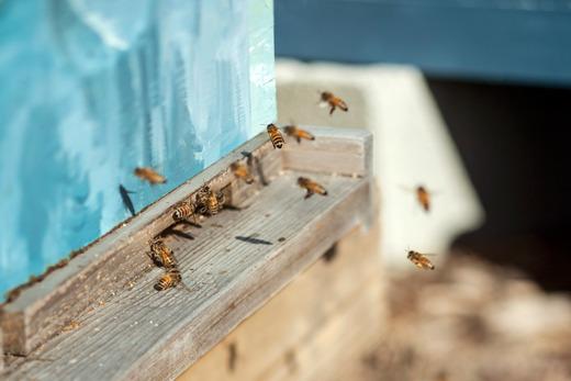 beekeeper_slideshow1.jpg
