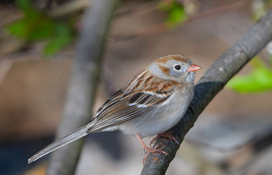 un_slideshow2_fieldsparrow.jpg