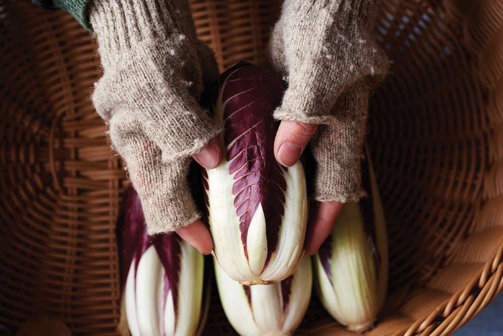 Stephanie Ziegler, Blooming Glen Farm, radicchio
