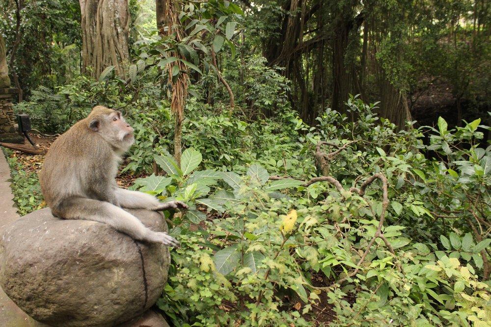 monkey reflects in Bali.jpg