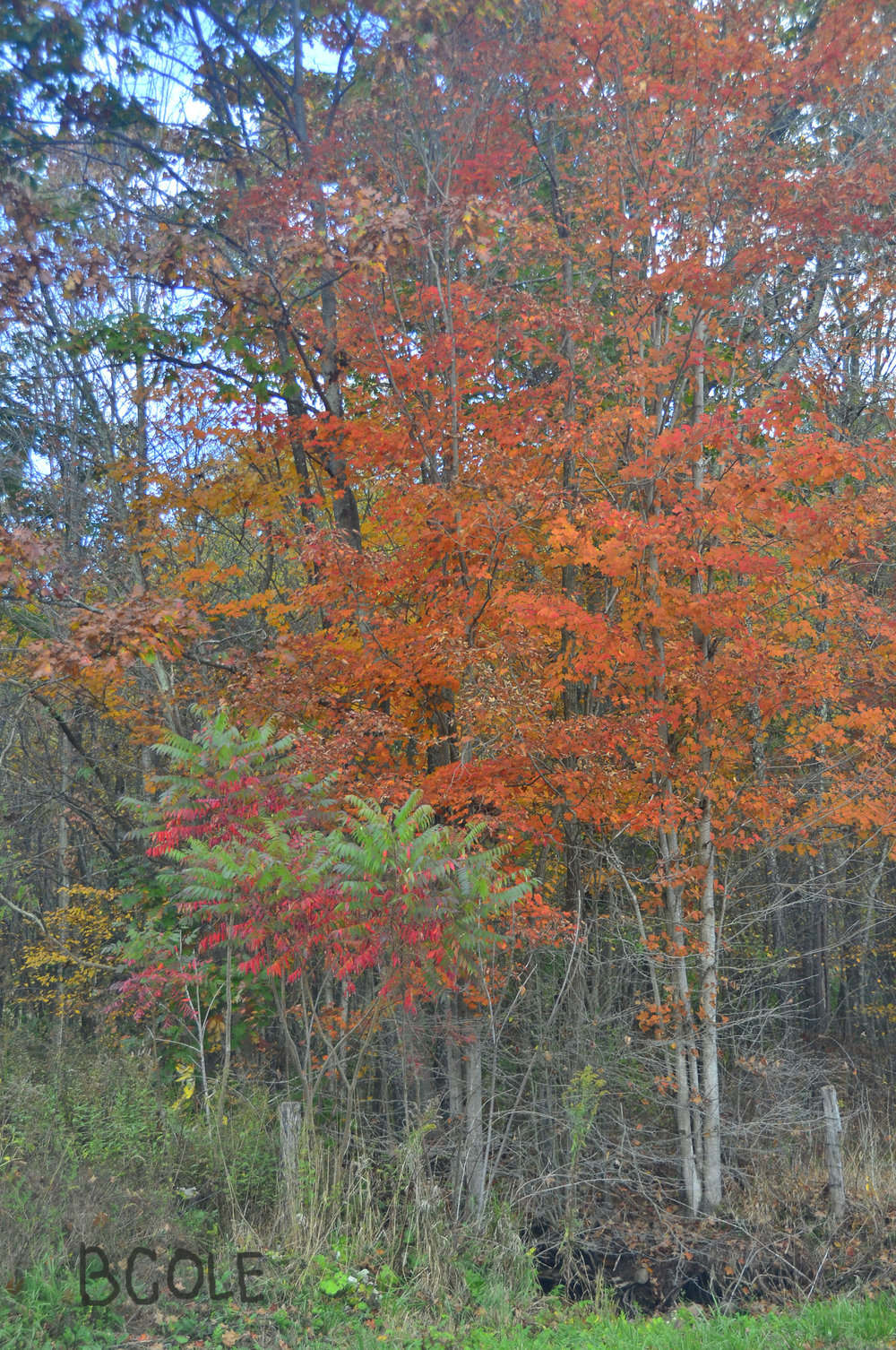 Fall Colors, West Virginia ©Beth Cole