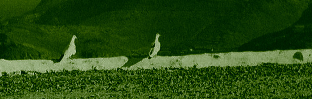 les deux pigeons - de Jean de la Fontaine© photographie Dimitris Harissiadis