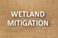 Wetland Mitigation