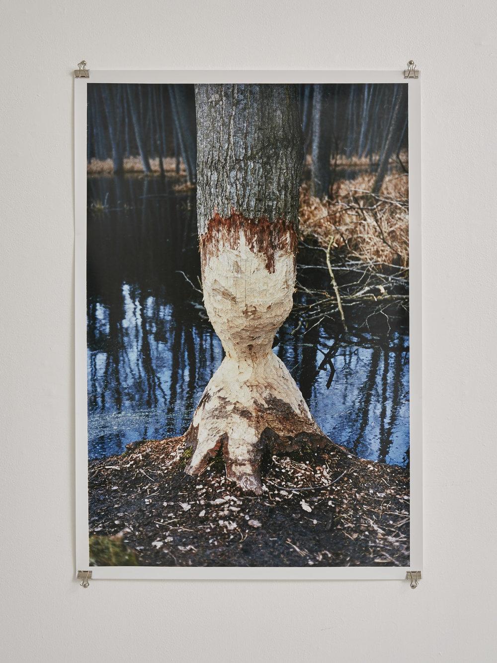 The Beaver Tree