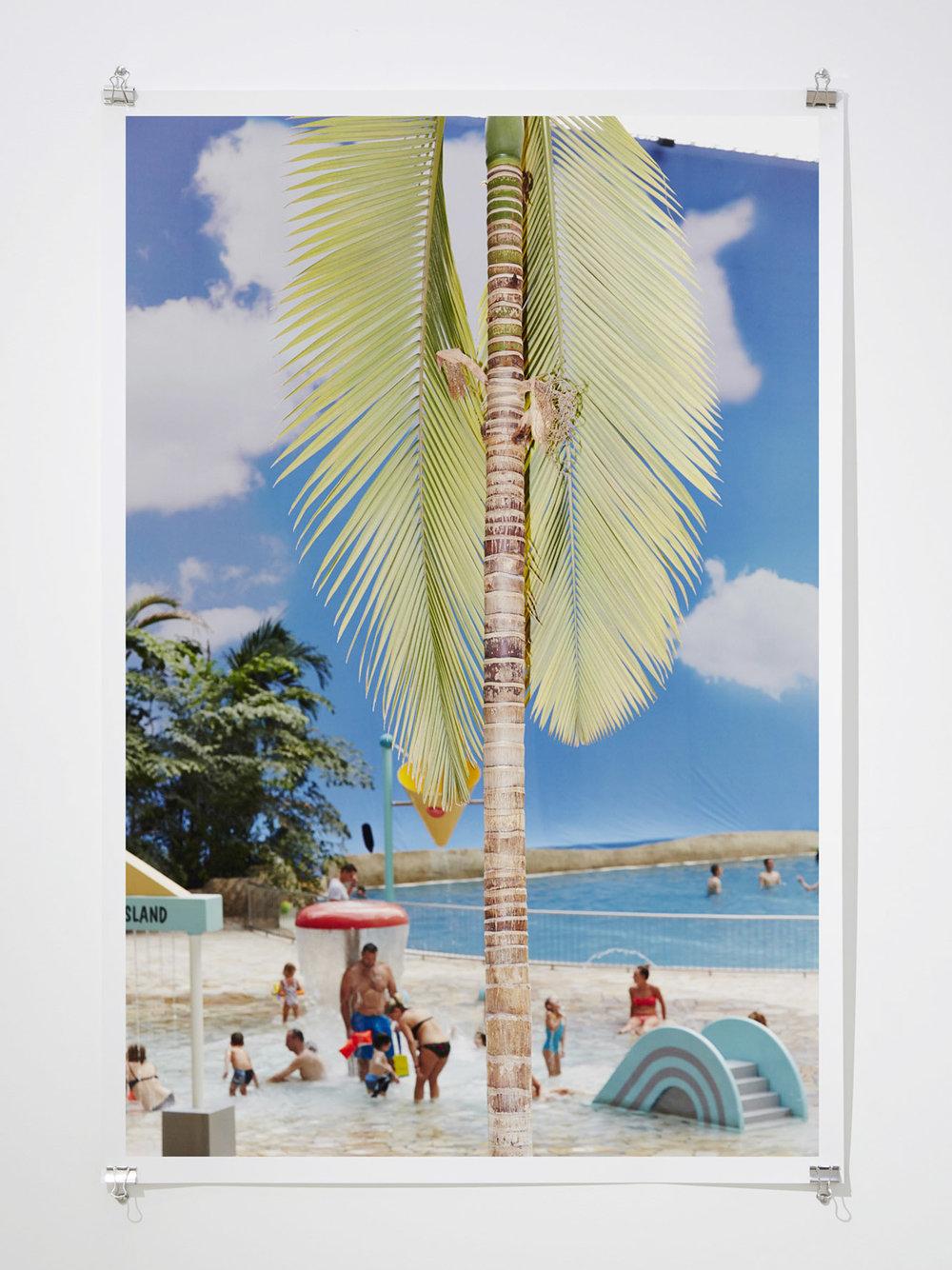 Palmenhaus , 2015  Digital C-Type Print  119 x 81 cm