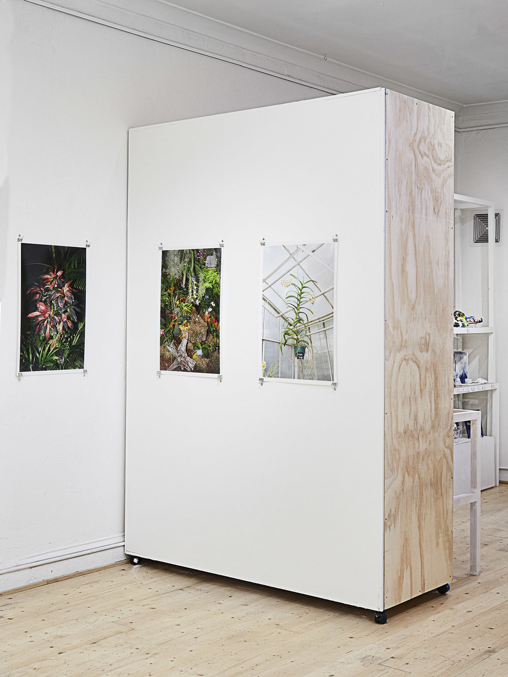 Impossible Plants  installation view