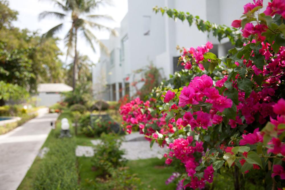 Den tropiska trädgården runt huset är en fröjd för ögat.