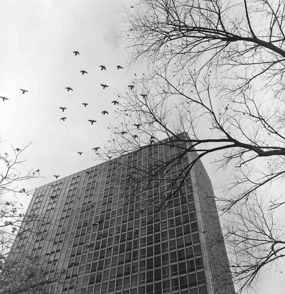 Ludwig Mies van der Rohe, Pavilion & Colonnade Apartments (Newark, NJ) 1960