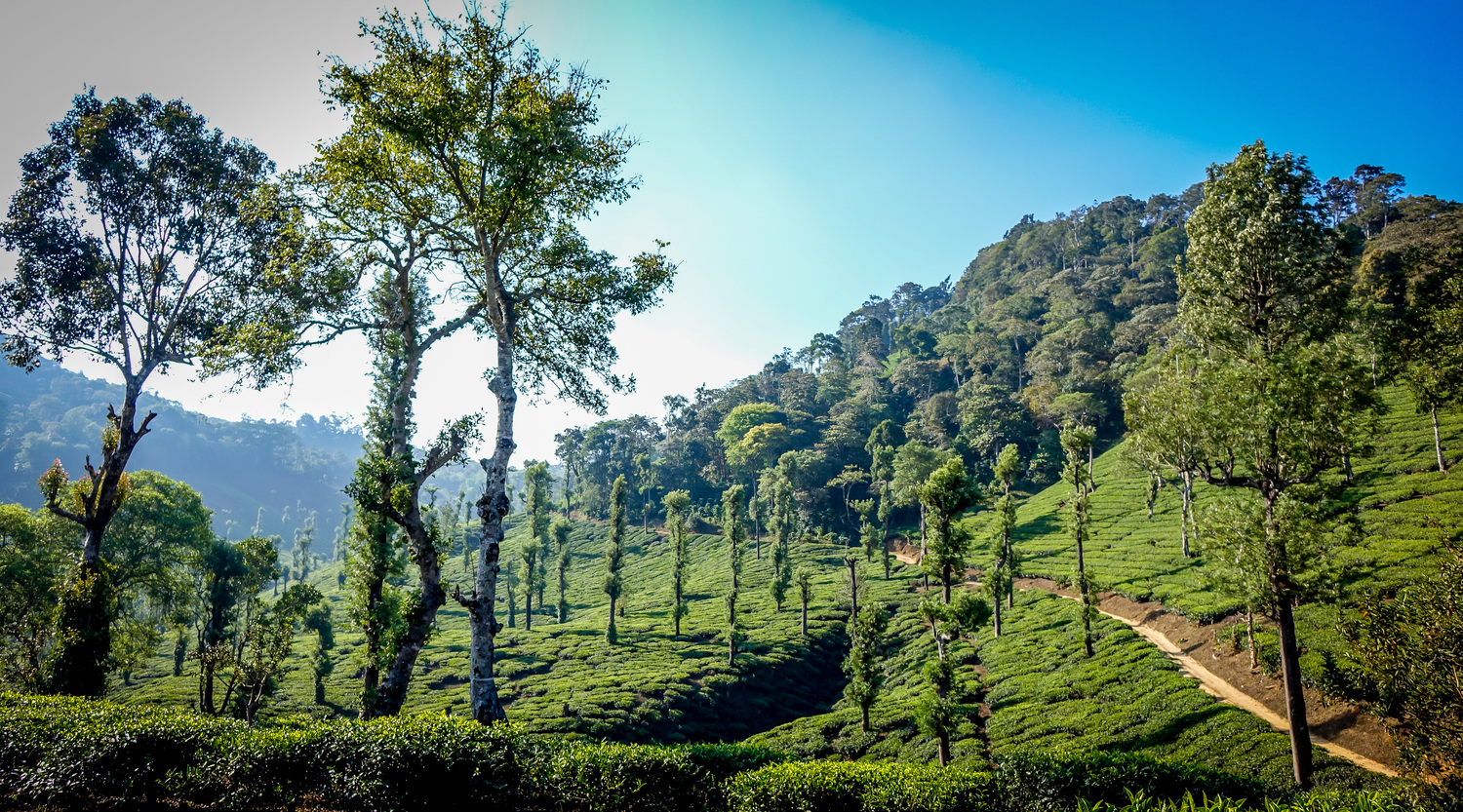 The herbs in HANAH ONE are harvested in the beautiful hills of Kerala, India.