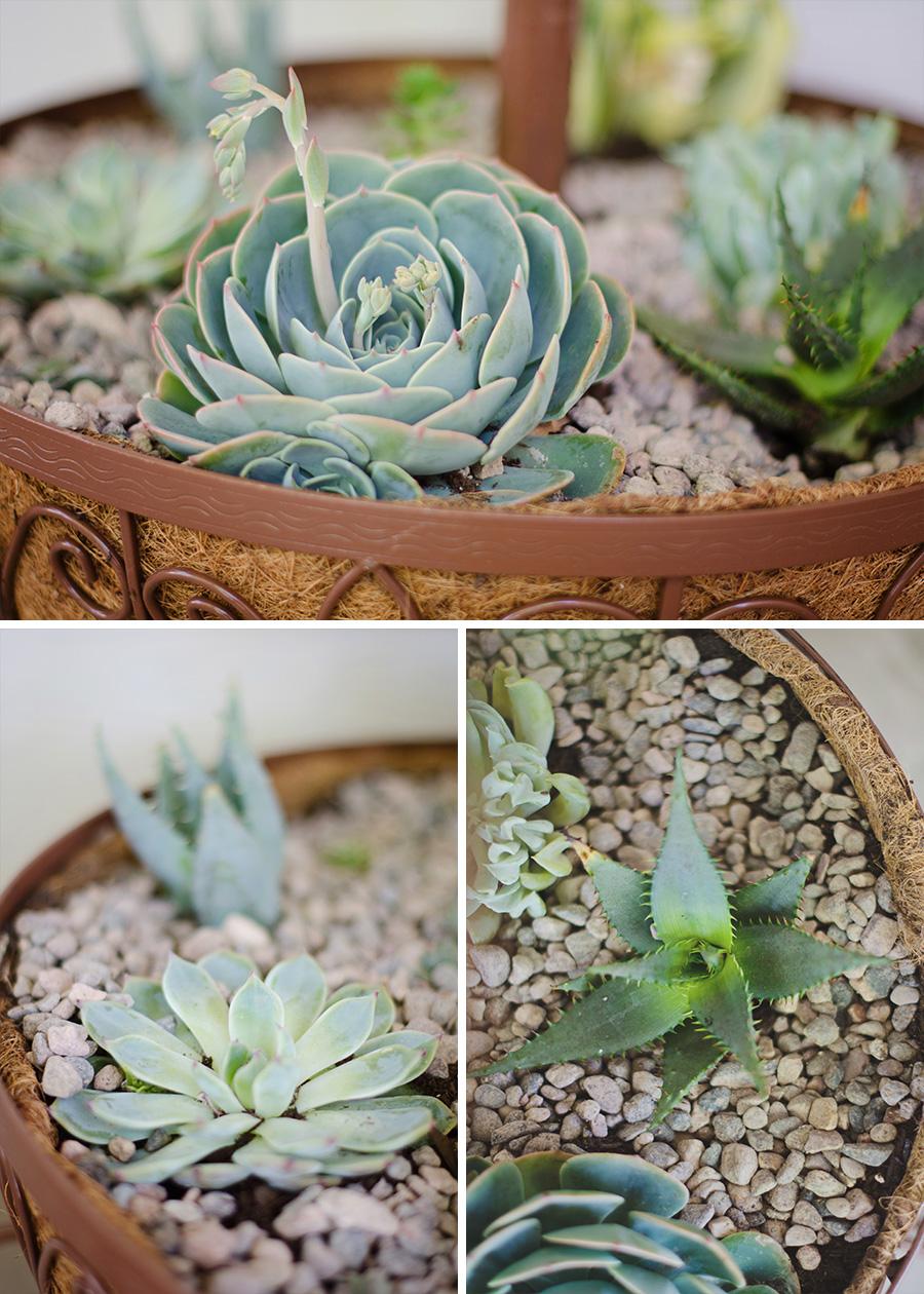 succulent blog 4