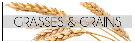 Grasses & Grains.jpg