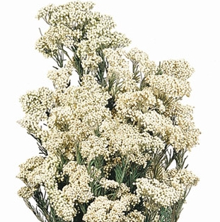 RICEFLOWERS$8.25/bunch - 4oz. BUNCHES